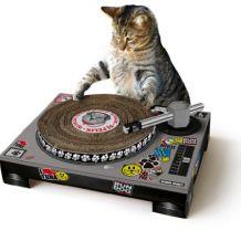 Grattoir pour DJ Chat