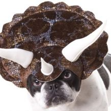 Costume de Tricératops pour Chien
