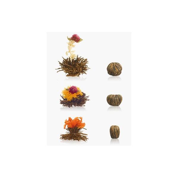 Fleurs de Thé Noir Abloom en Recharge (x6)