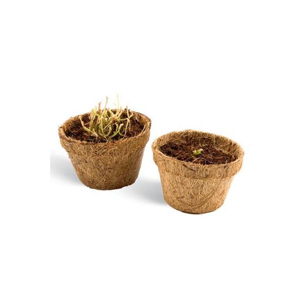 kit plantes carnivores id e cadeau france. Black Bedroom Furniture Sets. Home Design Ideas