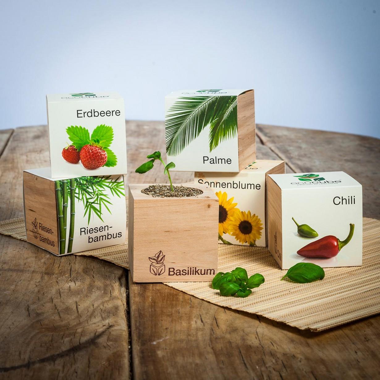 Ecocube – plantes dans cubes en bois