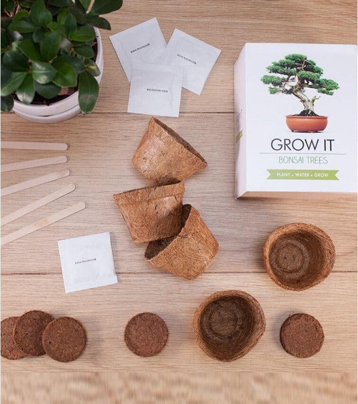 Kit de plantation pour bonsaï